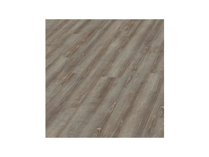 Grey Pine | 5979