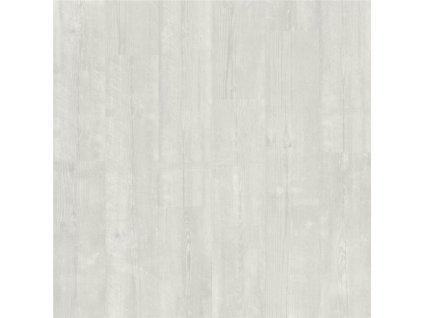 Borovice sněžná AVMP 40204