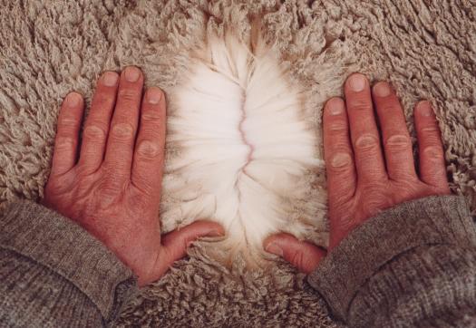 Hands Parting Fleece NZ Merino Lake Hawea Station