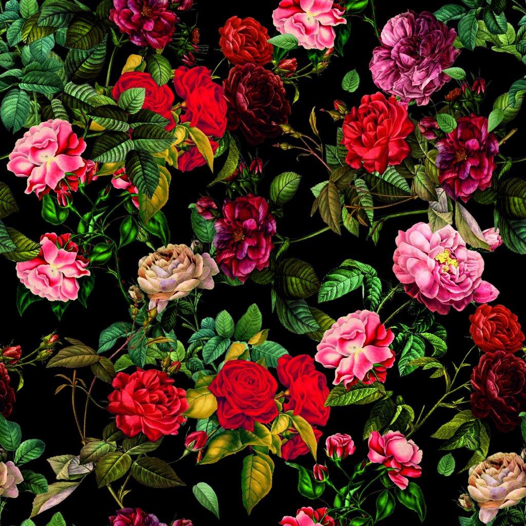 726035 2 růže na černé