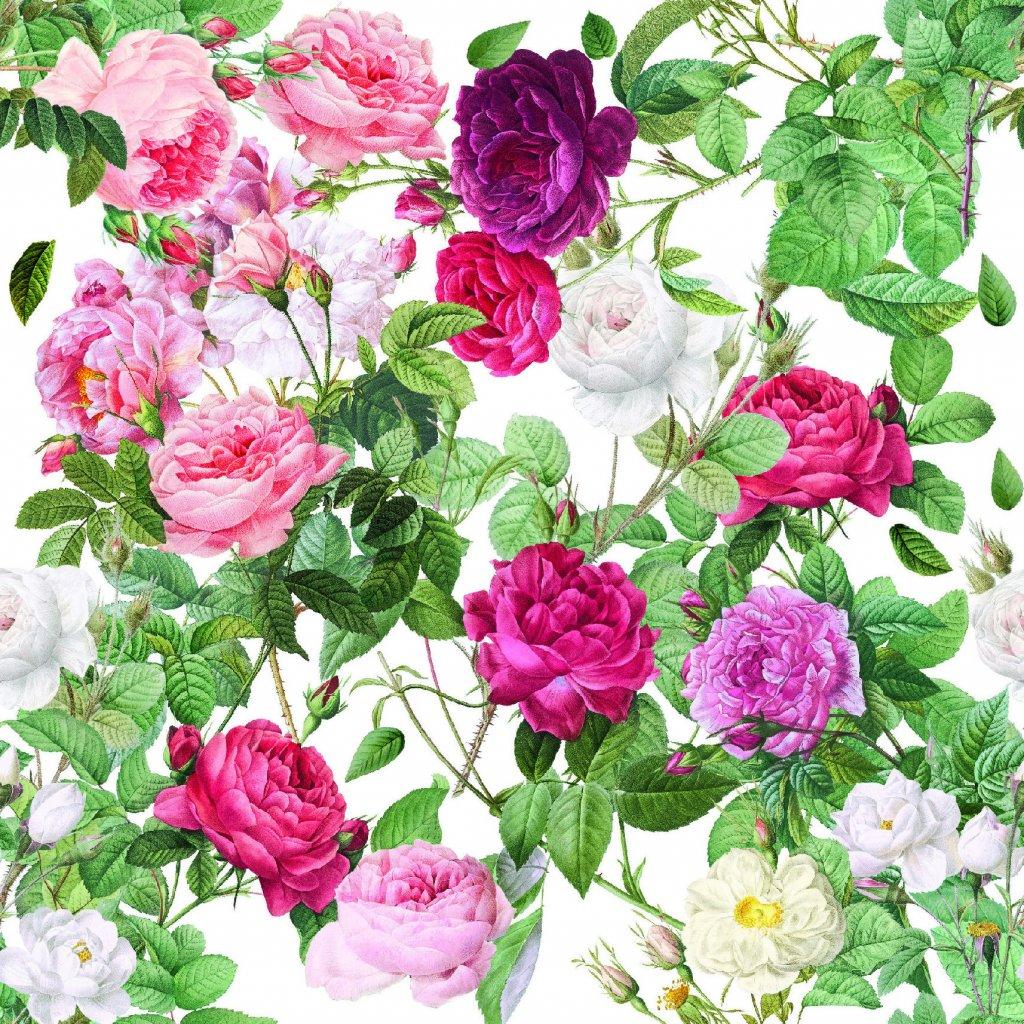 726036 1 růže na bílé