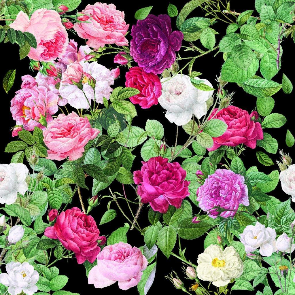 726036 2 růže na černé