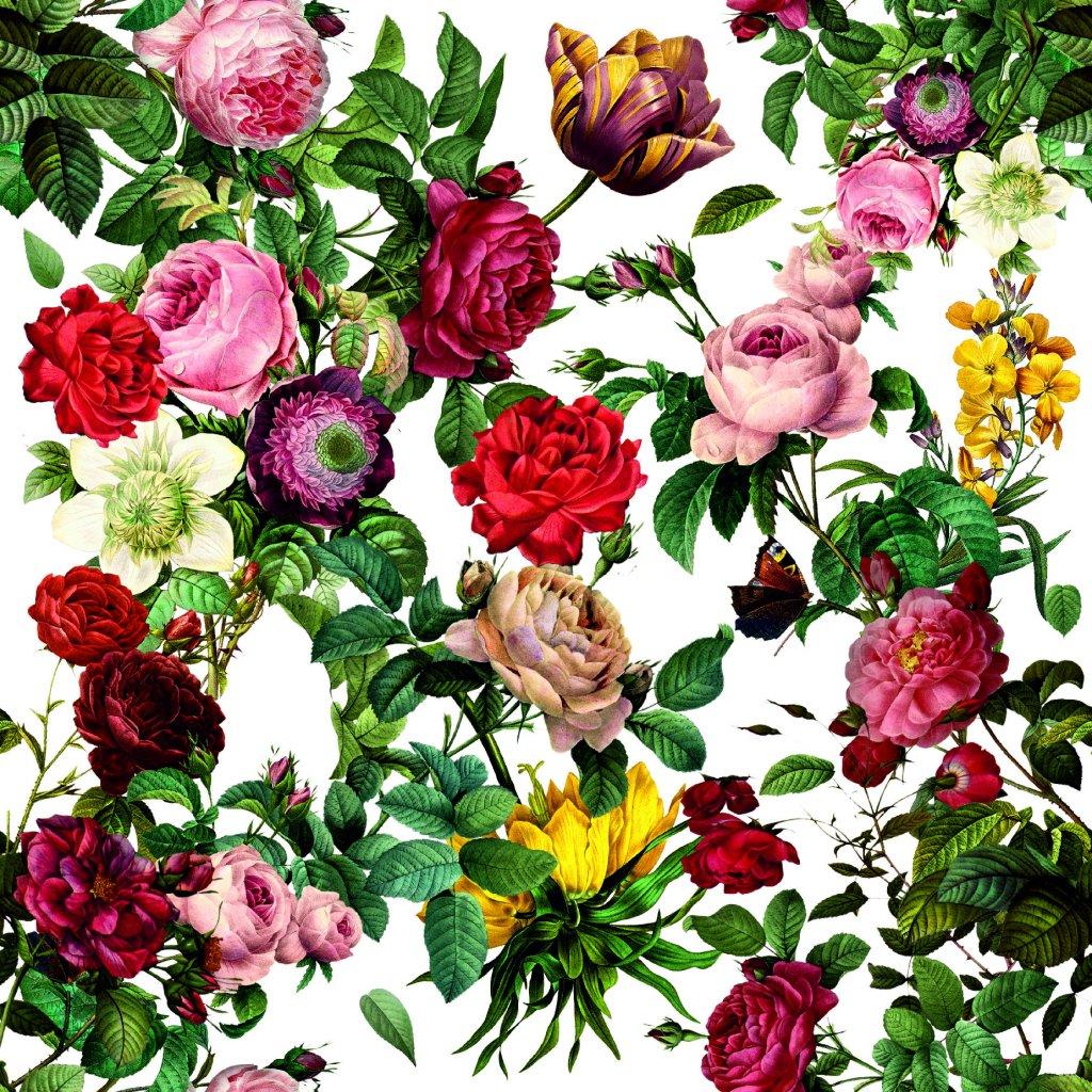 726038 1 růže na bílé