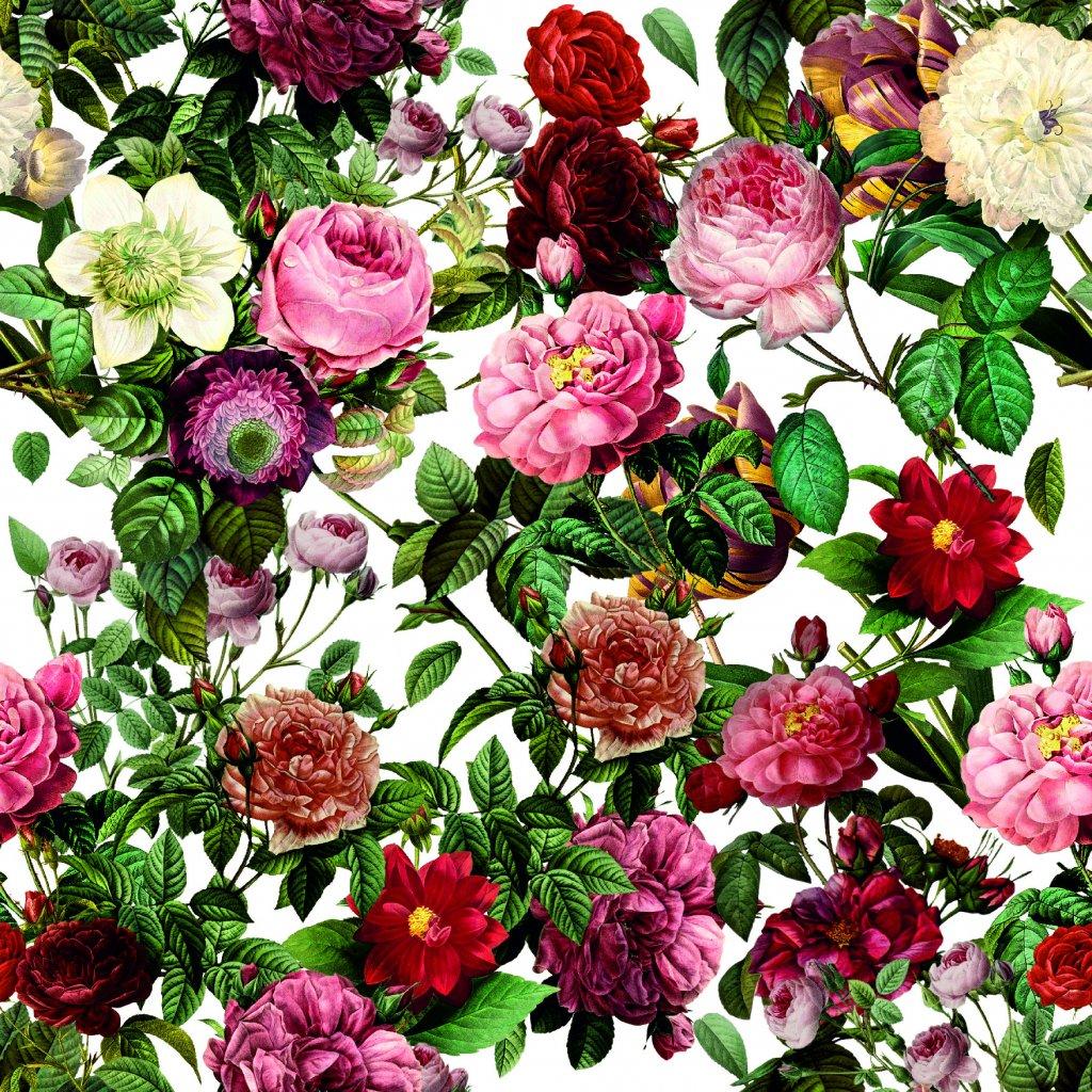 726039 1 růže na bílé