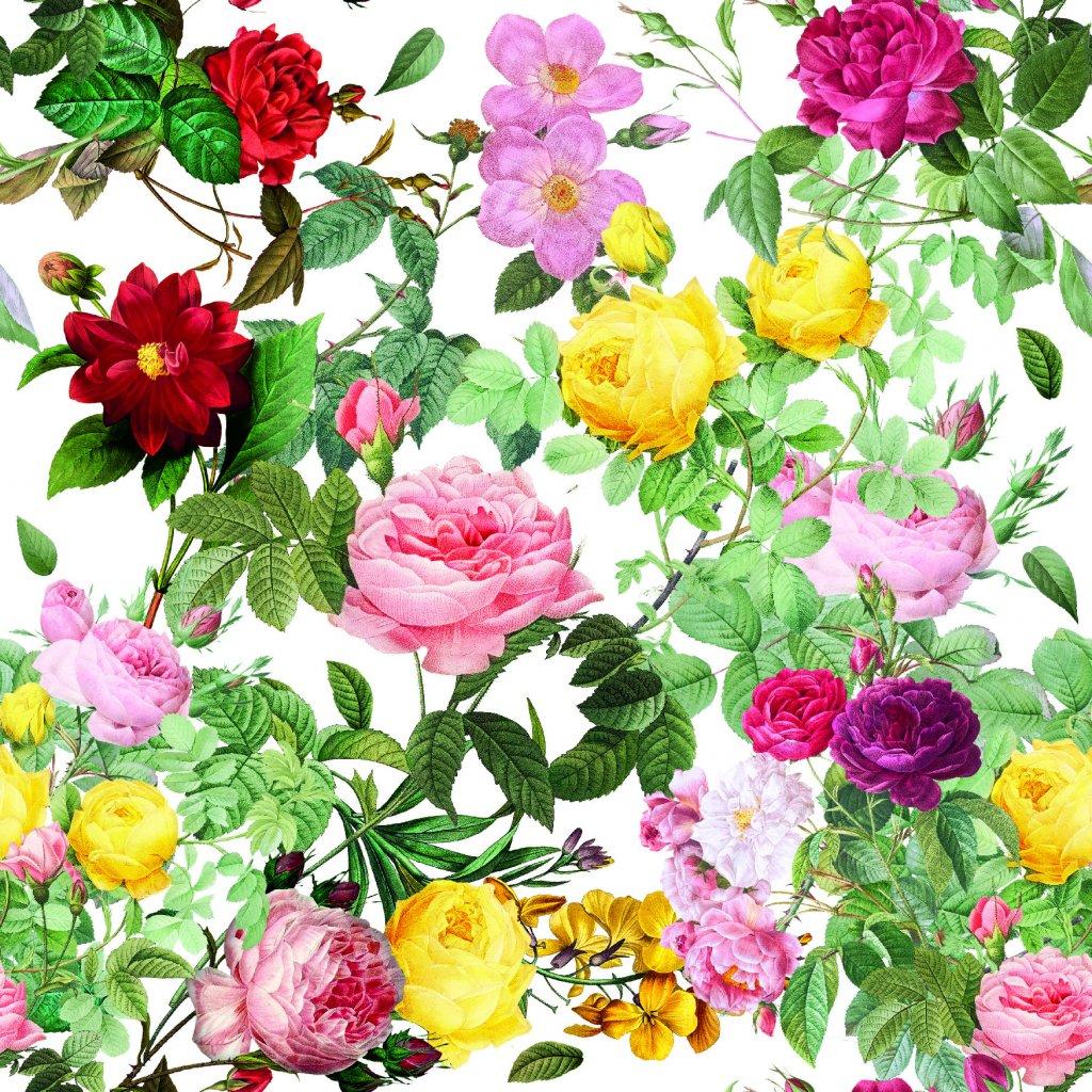 726042 1 růže na bílé