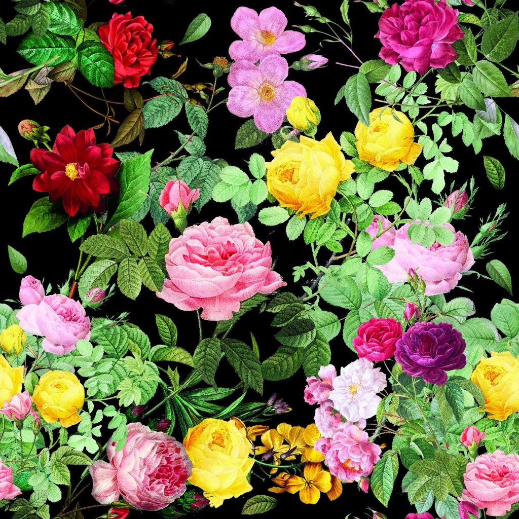 726042 2 růže na černé