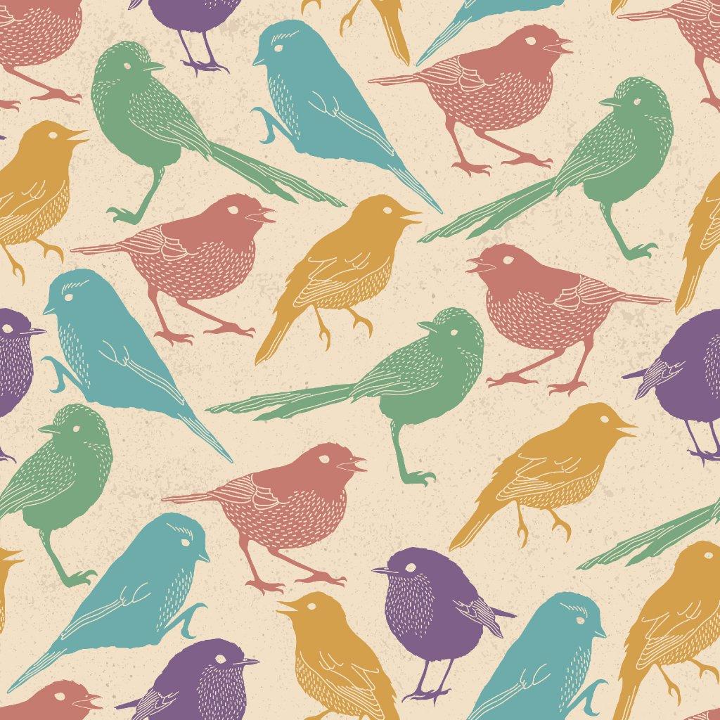 765019 ptáčci