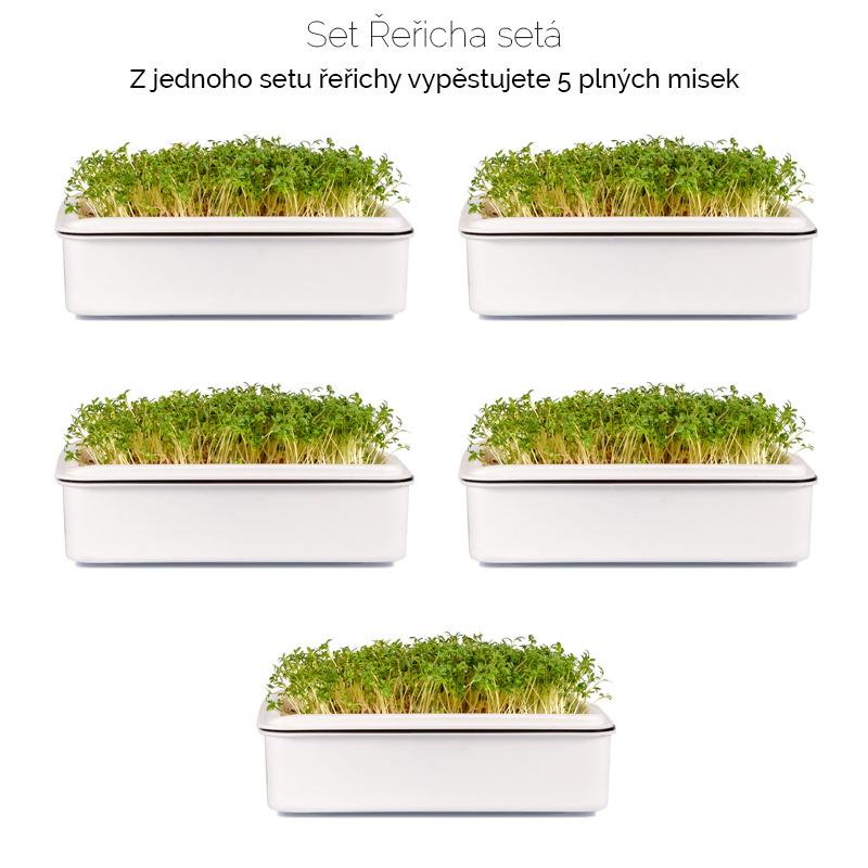 řeřicha_setá-množství