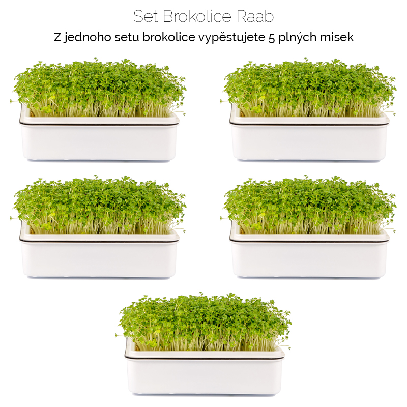 brokolice_raab-množství