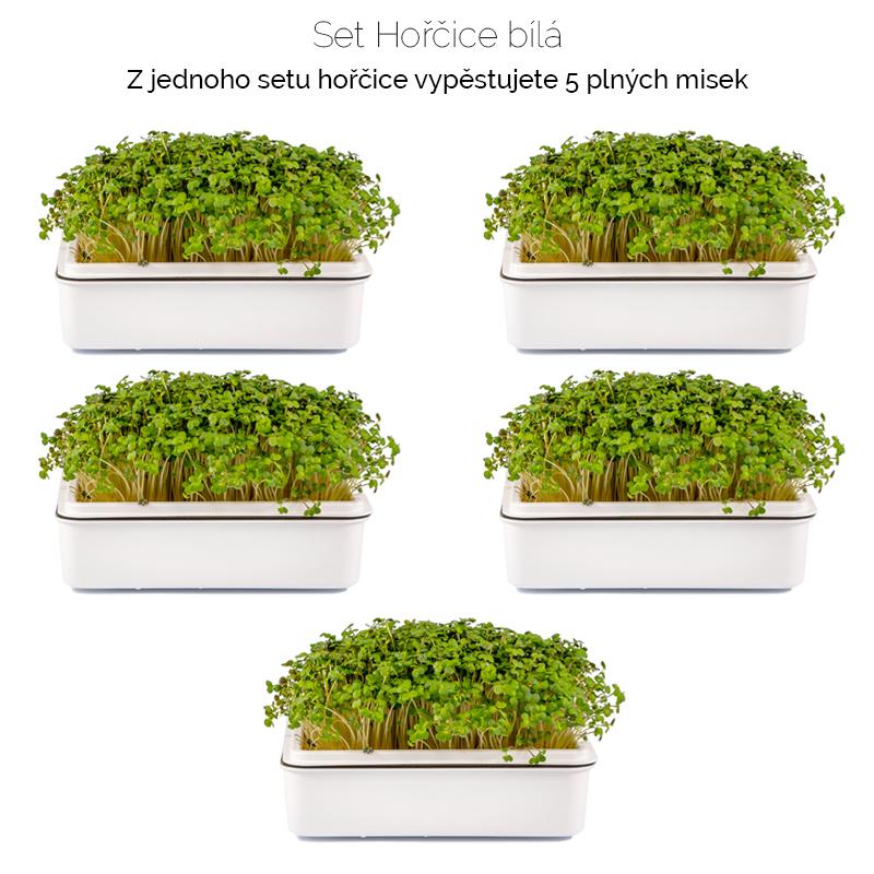 hořčice_bílá-množství