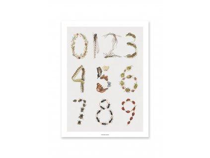 Plakát Insects - 40x50cm