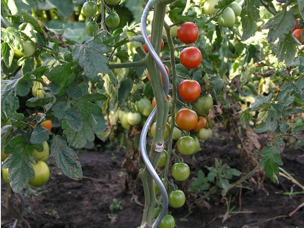 spirálová tyč na rajčata 4