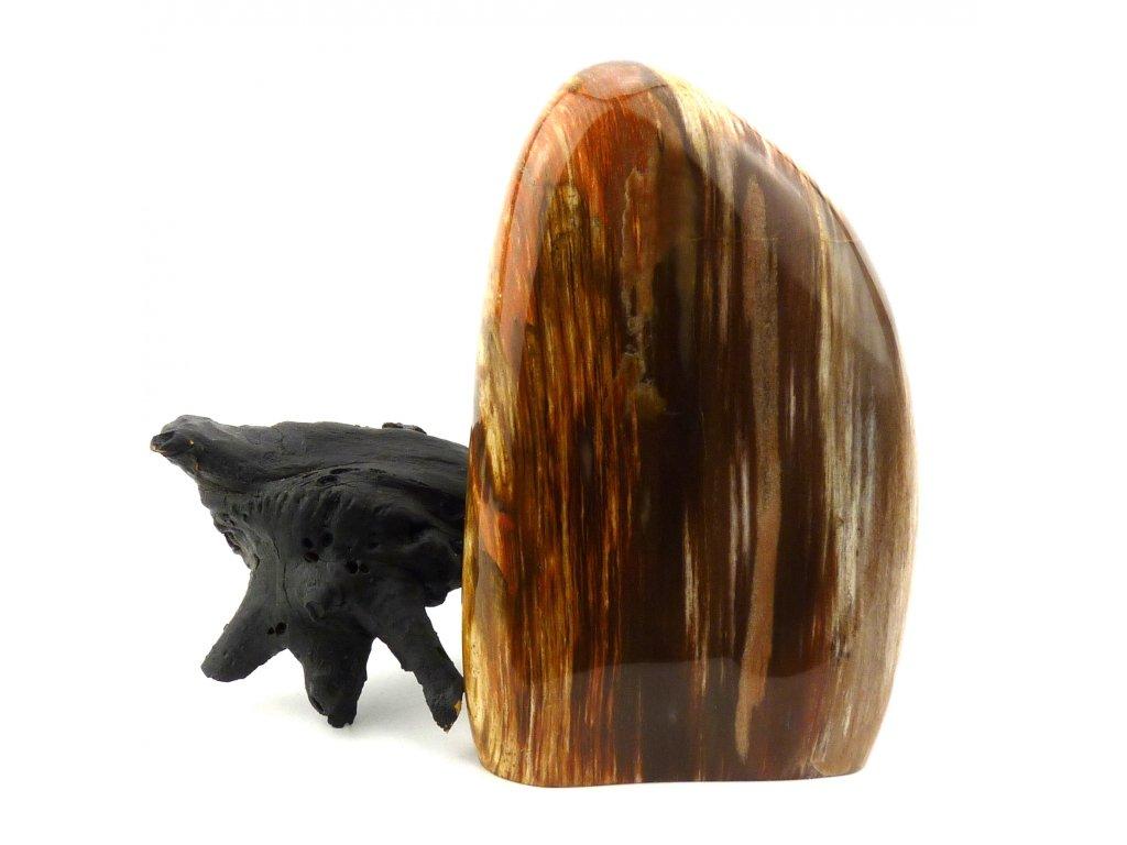 Zkamenělé dřevo stojka