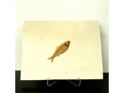 Fosilní ryba