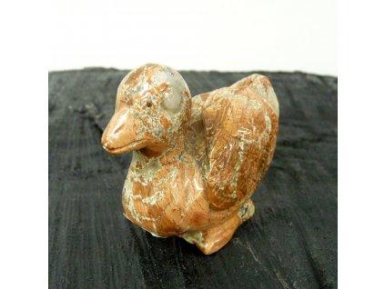 Jaspis kachna