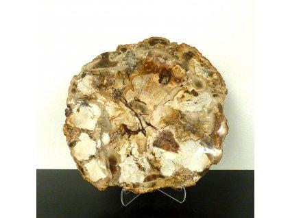 Zkamenělé dřevo plátek