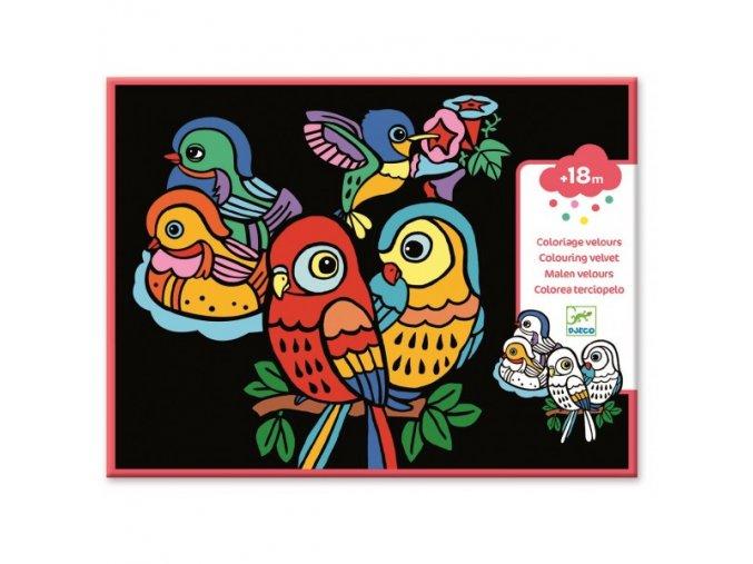 Veselí papoušci