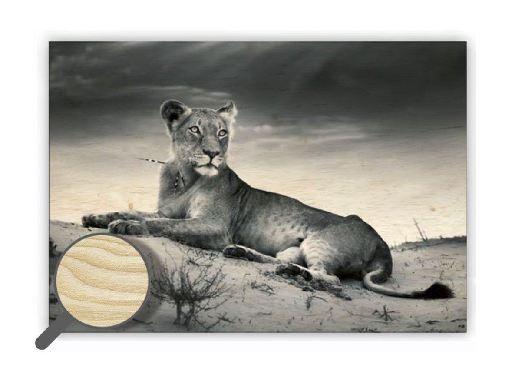 Drevený obraz Lioness