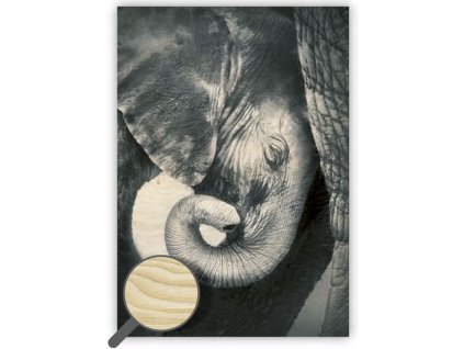 Drevený obraz Little Elephant