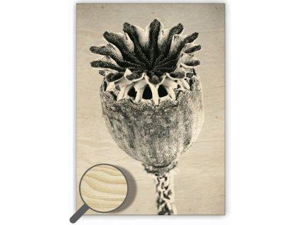Drevený obraz  Poppyhead