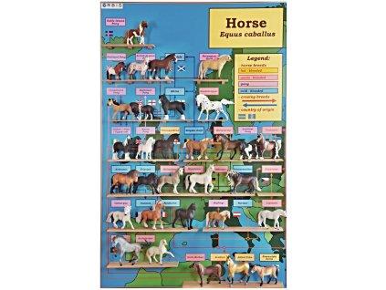 Kůň_Horse_Equus caballus