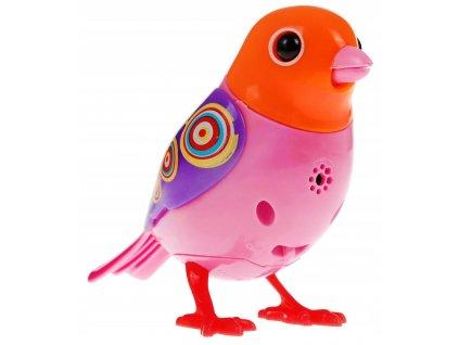 ptáček 1