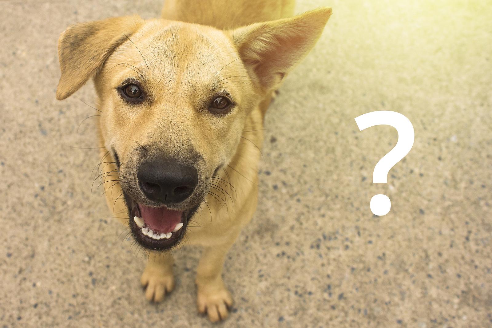 Mi okoz hasmenést kutyáknál?