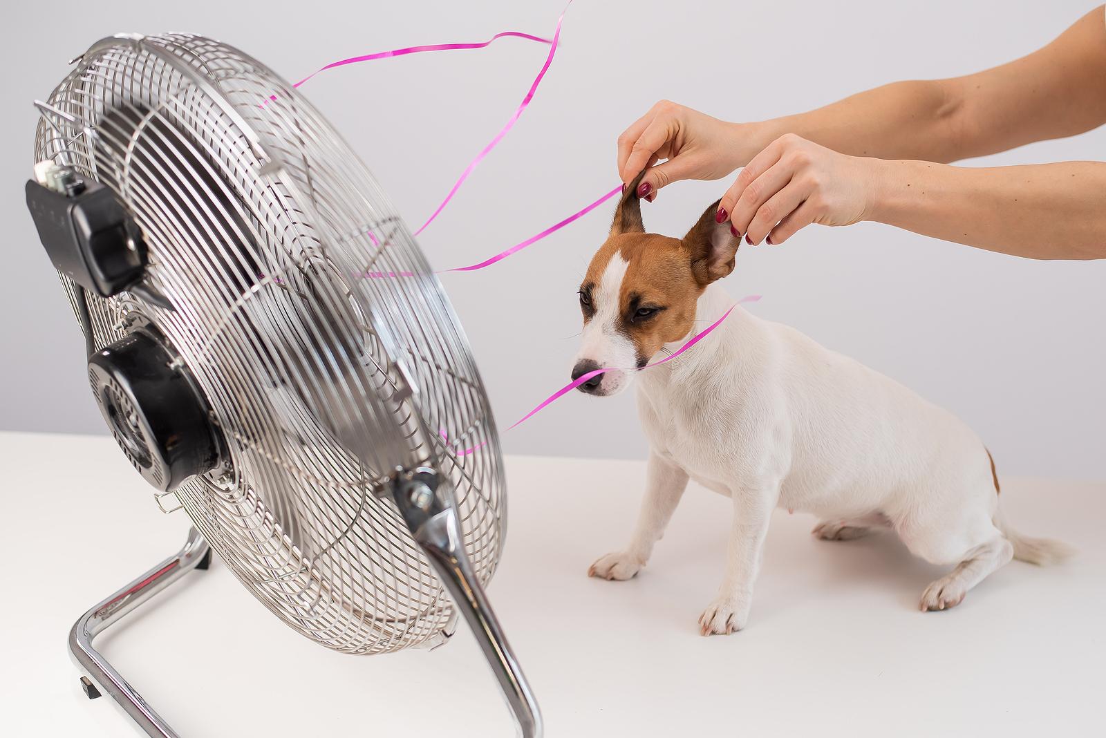 Védjük a kutyánkat a kánikula ellen!