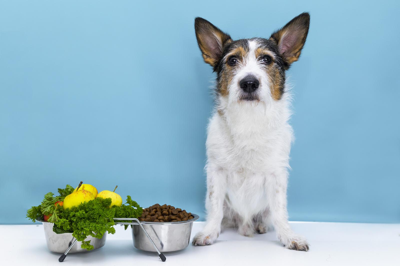 A megfelelő étel kiválasztása az idősebb kutyák számára