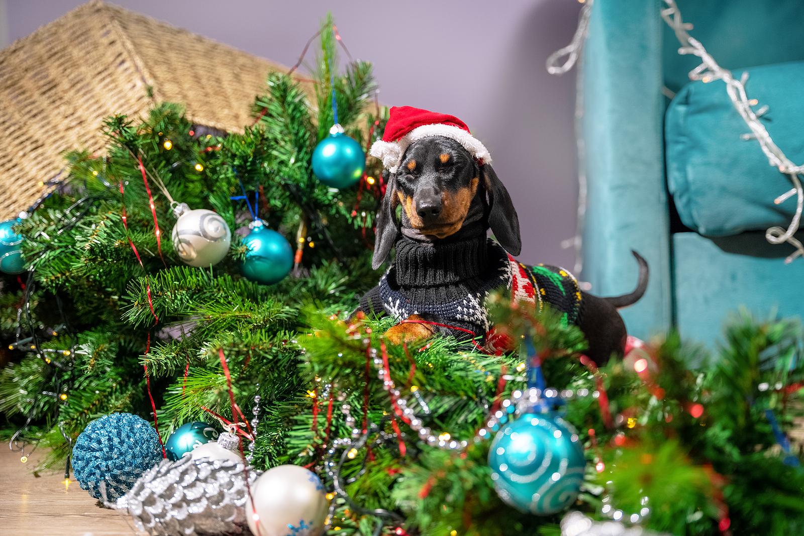 Hogyan tegyük örömtelivé és biztonságossá a karácsonyt a kutyák számára?