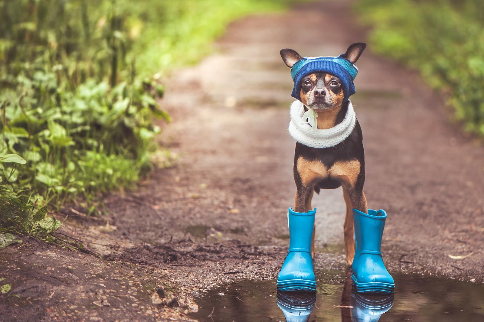 Mi a kutya helyes táplálásának módja az őszi-téli hónapokban?