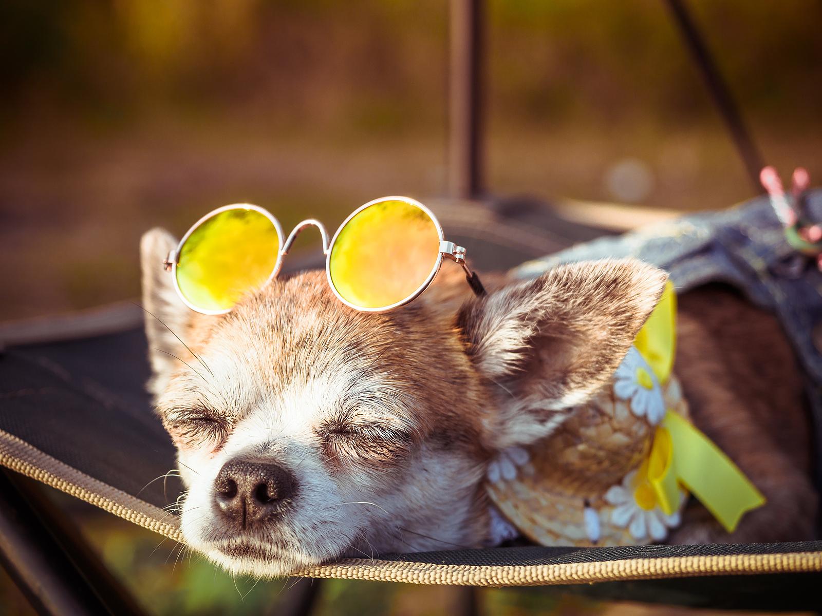 Óvjuk meg kedvencünket a káros napsugaraktól!