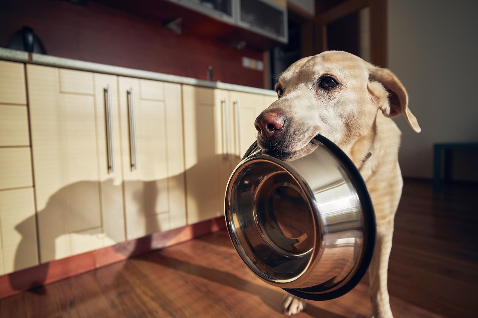 Milyen gyakran és mennyit ételt kapjon a kutya?