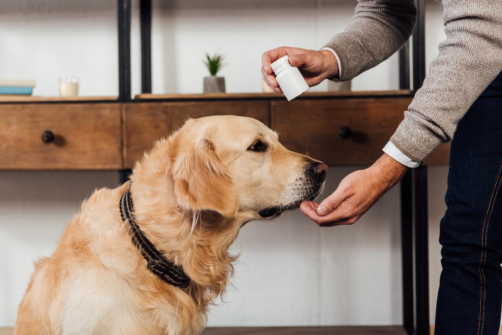 Hasznosak-e a probiotikumok a kutyák számára?