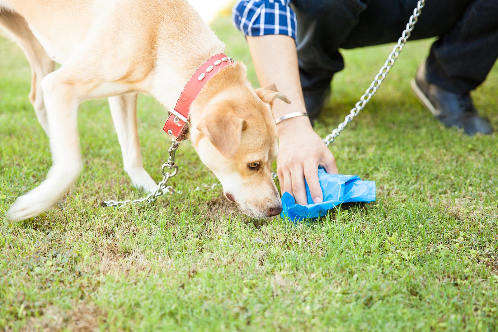 Mit tegyek, ha megeszi az ürülékét  a kutyám?