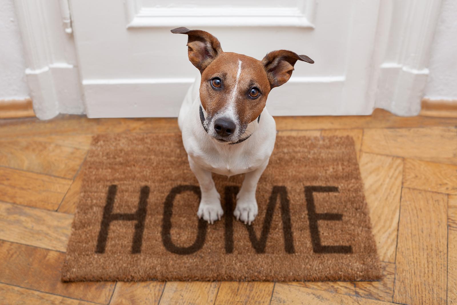 kutya-otthon-egyedül