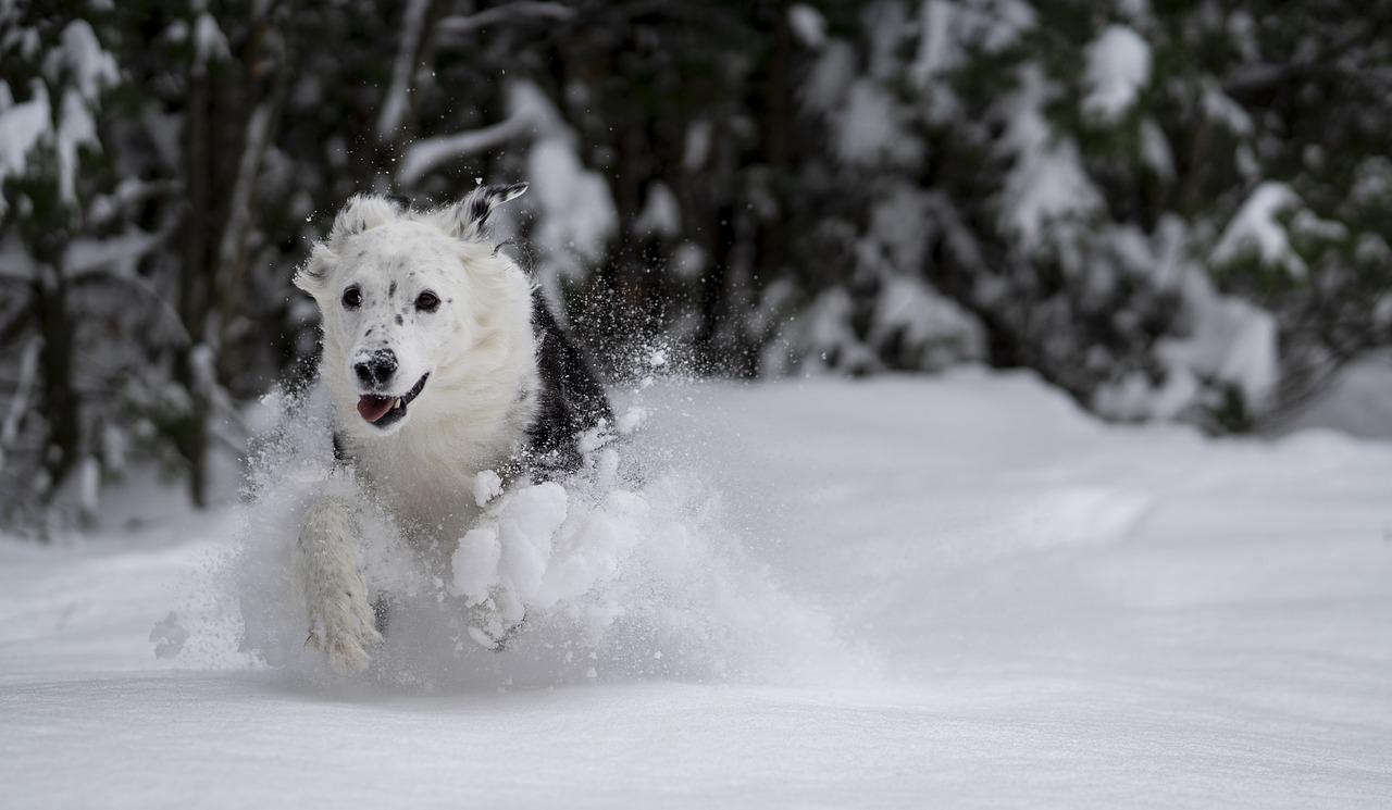 Se psem v zimě na hory