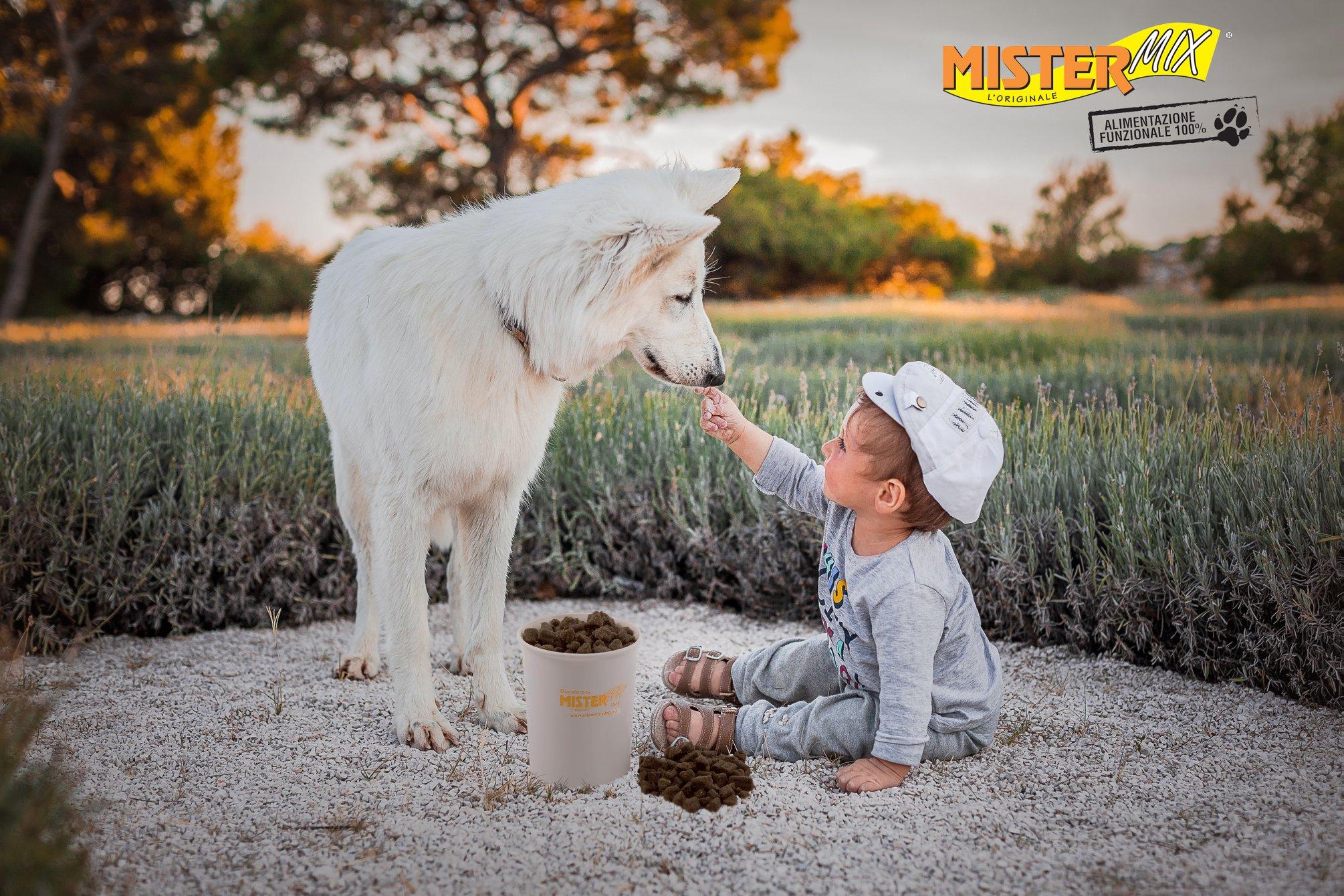 Průvodce krmivem pro psy