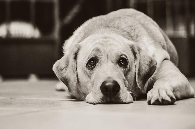 Co dělat, když pes kašle