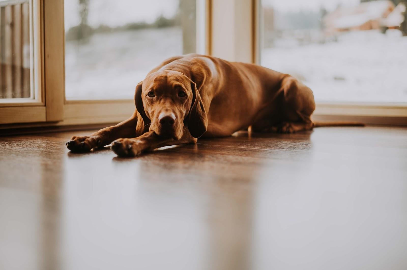 Proč má pes horké uši?