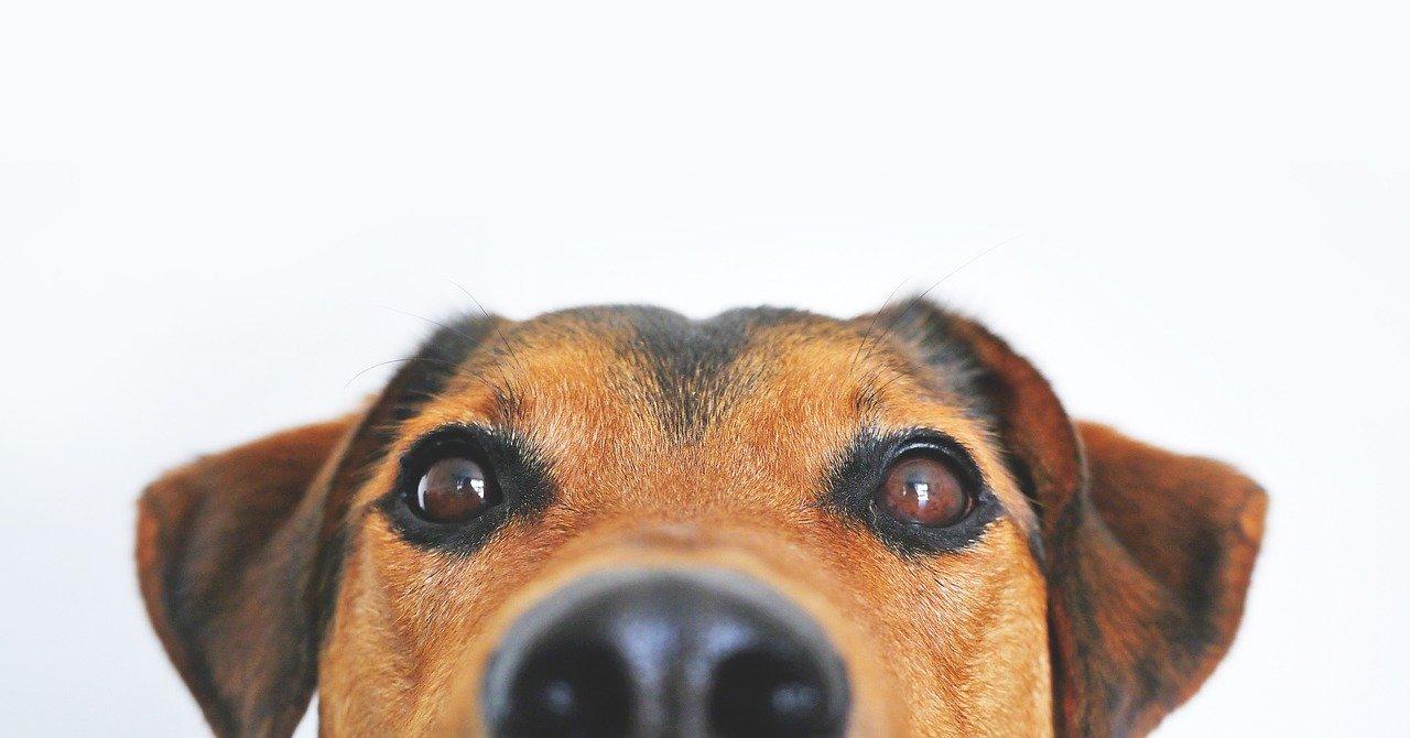 Jak vidí váš pes?