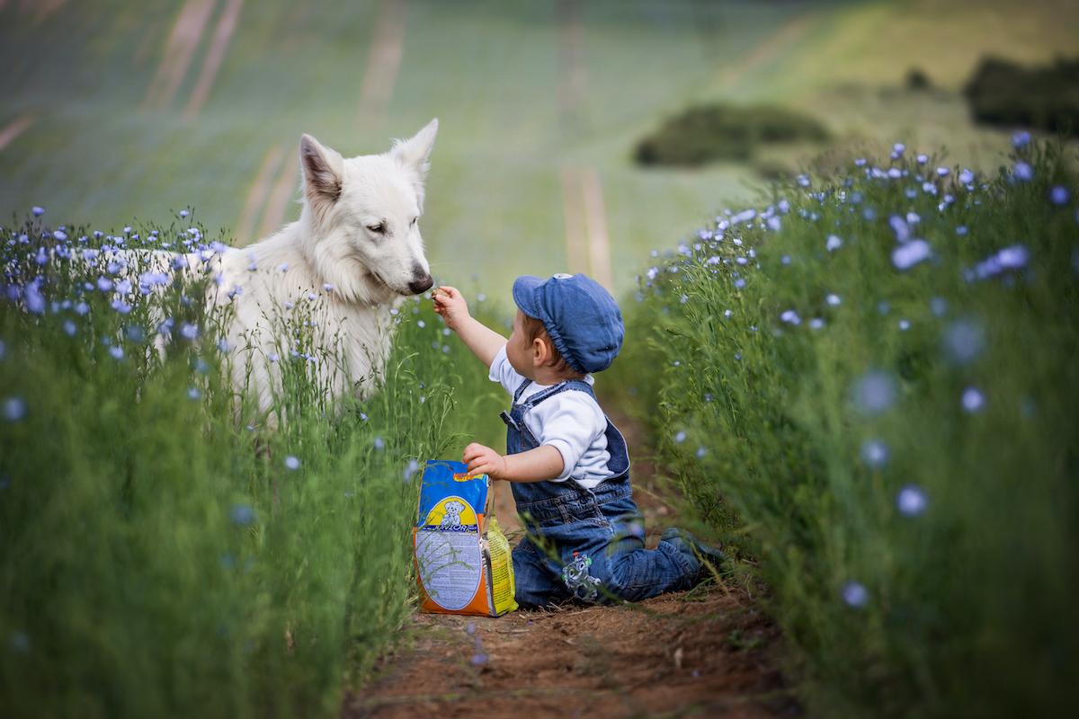 Sprievodca krmivom pre psov