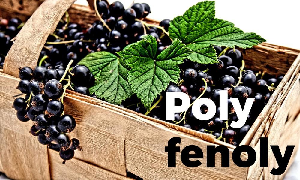 Polyfenoly jako základ pro zdraví buněk i celého organismu. Kde je získat?
