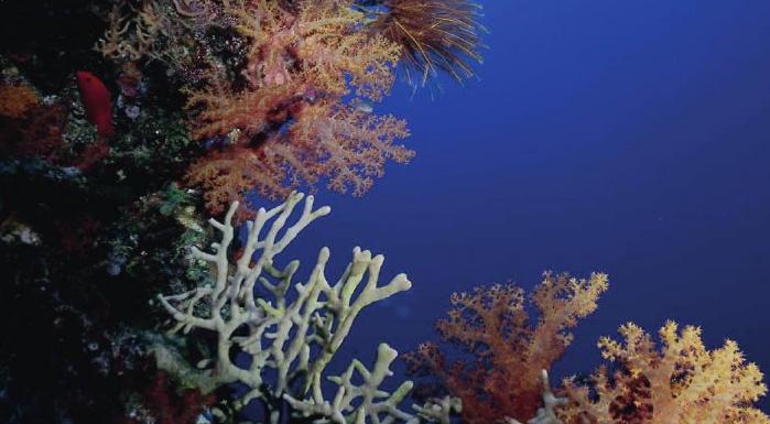 Doplněk stravy s práškem z korálů Sango, hořčíkem a draslíkem Pro Sango Vital – korály v moři