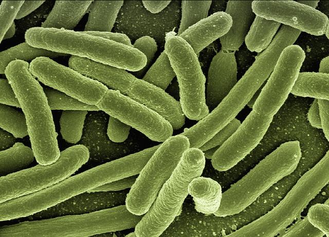 bakterie infekční průjem