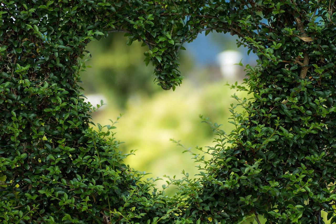 srdce-priroda-doktor-prirodni-mediciny