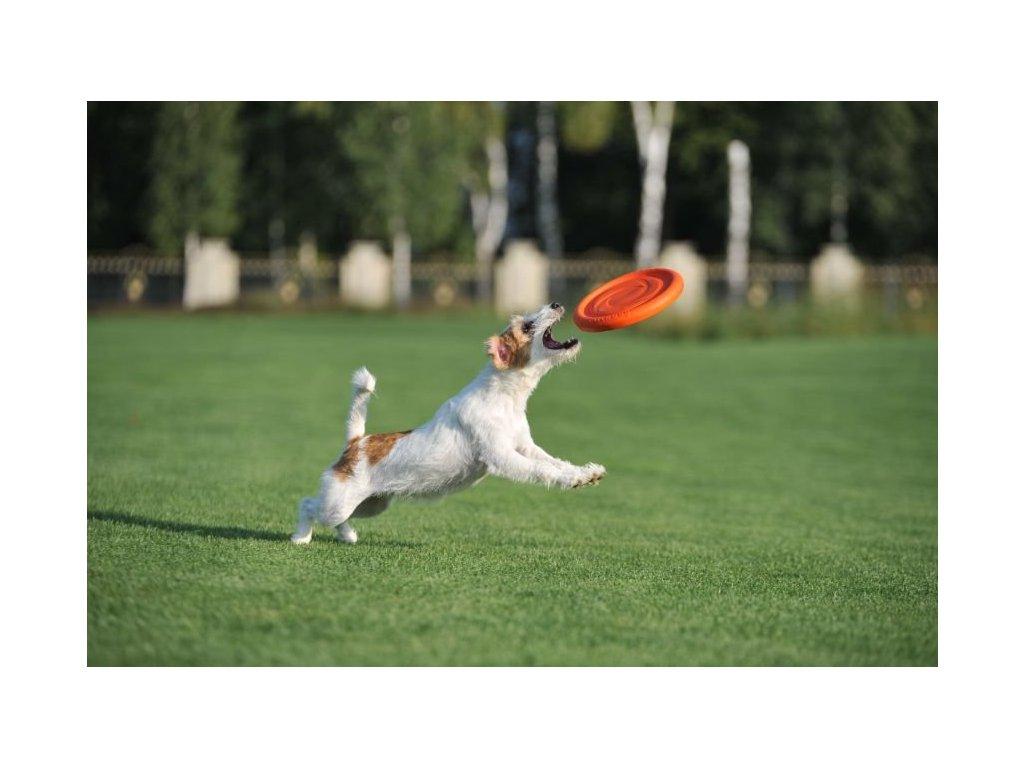 pitch dog tanier
