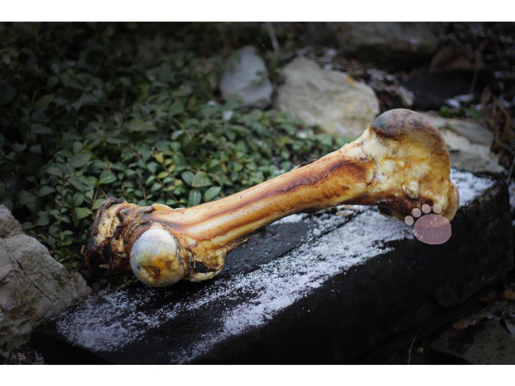 hovädzia špiková kosť