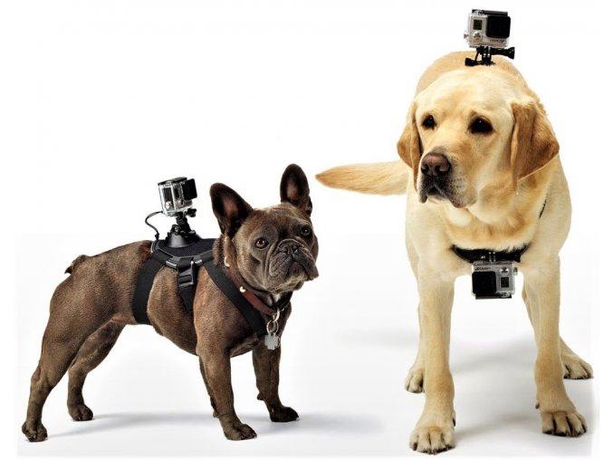 Postroj pro psa pro kamery GoPro 6