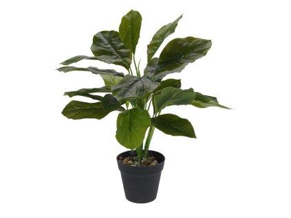 Rostlina v nadobě průměr 45cm INTESI